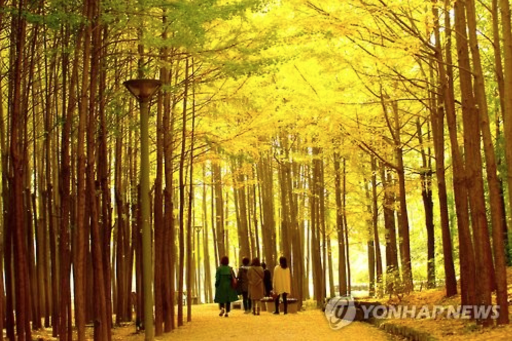 Seoul Forest in fall. (image: Yonhap)