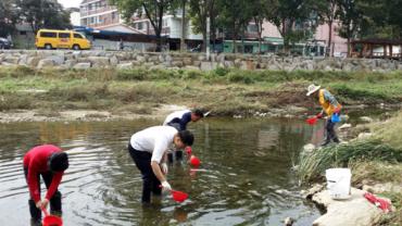 Using Mudfish for Mosquito Larva Control