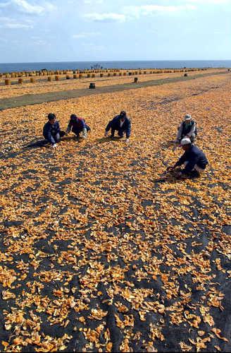 Drying tangerine peels. (image: Yonhap)