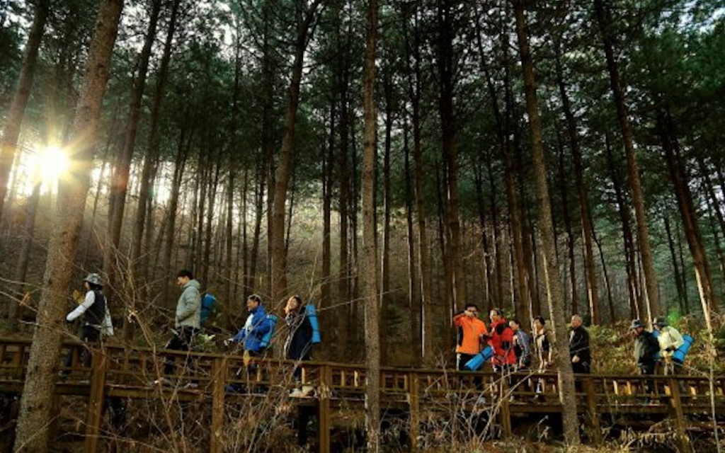 Following a quick health check-up, they were led through the forest to experience different therapy programs, including therapeutic walking and physical exercises, barefoot walking, and lying down for a view of the sky, all of which incorporated becoming one with nature. (image: Korea Forest Service)