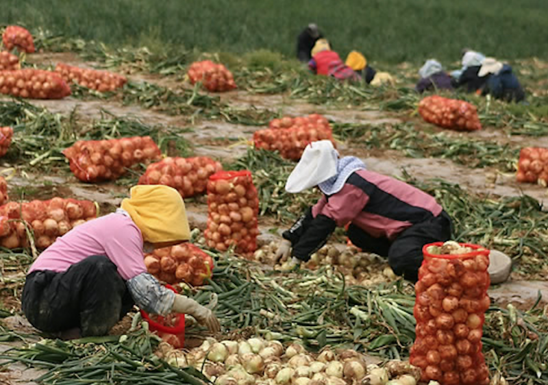 Korean Researchers Find Innovative Uses for Agricultural By-Products