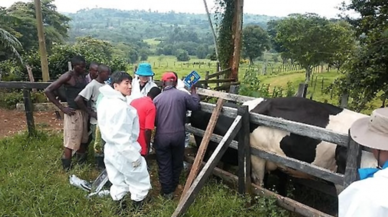 Korea Exports Genetic Resources for Dairy Cattle to East Africa