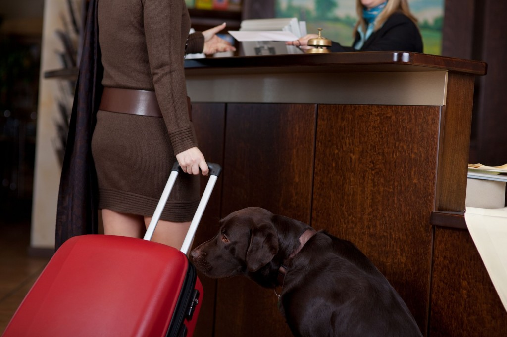 """We've seen an increasing number of airlines and accommodation facilities that support travel with pets, along with higher demand for a greater variety of pet-exclusive services."" (image: KobizMedia/ Korea Bizwire)"