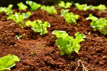 Biofloc Proves Useful in Vegetable Farming