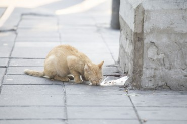 S. Korea Reports Suspected Case of Avian Influenza in Cats