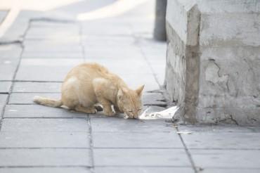 S. Korea Reports Suspected Case of Avian Influenza in Cats