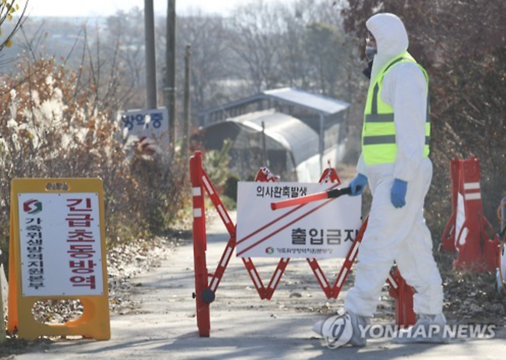 The military's half-hearted efforts in helping to ease the country's historic AI outbreak are starting to face criticism, and the excuse of opposition from the parents of conscripted soldiers is seen as unacceptable by many. (image: Yonhap)