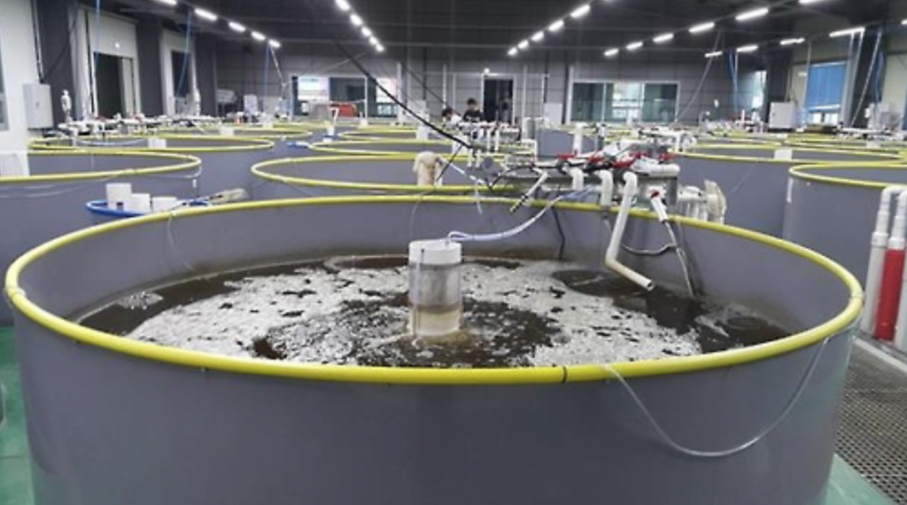 The institute's water culture research center, in partnership with Gyeongsang National University, recently used the discharge water from biofloc fish tanks as fertilizer for vegetable farming (including carrots, eggplants, and lettuce), and discovered that the water helped boost plant growth and their functional elements. (image: Yonhap)