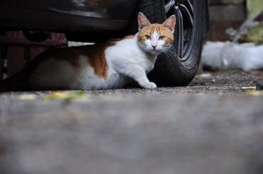 Stray Cats Safe for Now, Despite Bird Flu Fears