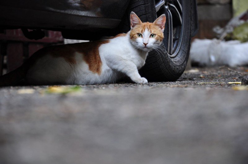 Police Officer Berates Resident for Feeding Cat Near Police Station