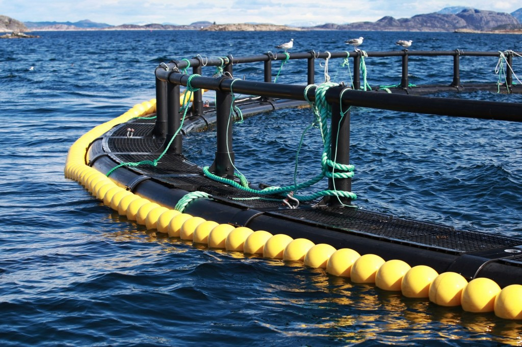 Ministry officials said the decision is based on the outlook that fish farming can become a lucrative industry when supported by the right technology and facilities. South Korea can have its own version of Norway's giant seafood Marine Harvest, they said. (image: KobizMedia/ Korea Bizwire)