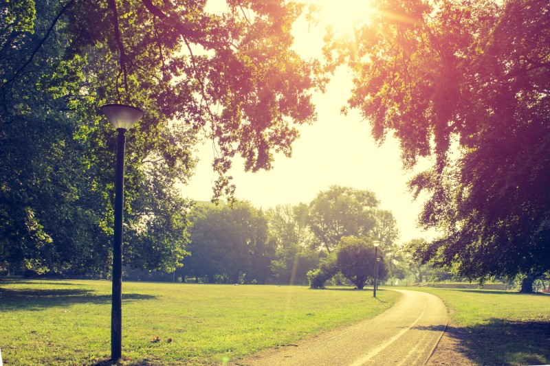 Living Near Green Spaces Decreases Risk of Hyperlipidemia