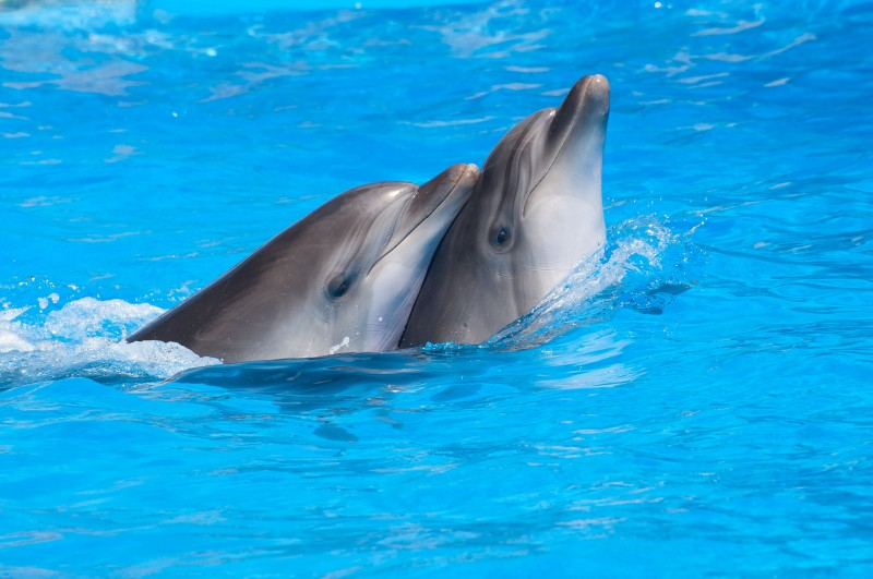 Animal Rights Questioned Following Death of Imported Dolphin
