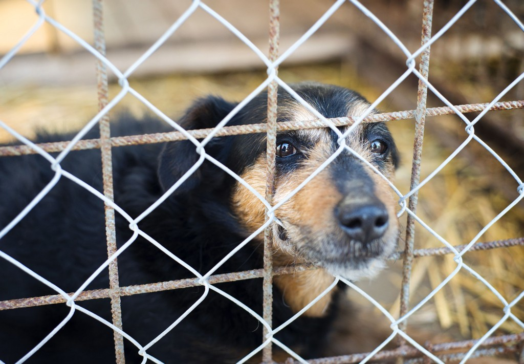 Thousands of pet dog factories are operating around the country without any control from the government, triggering concerns over possible animal abuse. (image: KobizMedia/ Korea Bizwire)