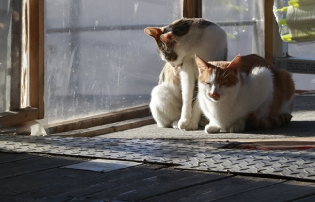 The negative image of cats becomes much more noticeable when compared to dogs, a species South Koreans have a strong preference for due to their friendly and bright image. (Image: Yonhap)