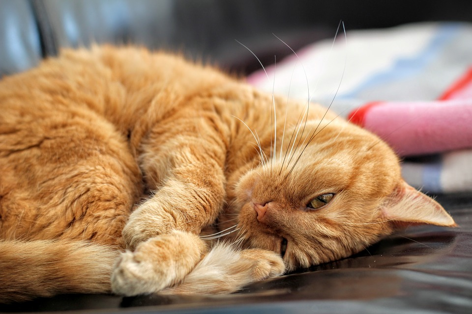 Cats, Once A Symbol of Luck, Face Ordeal in Modern South
