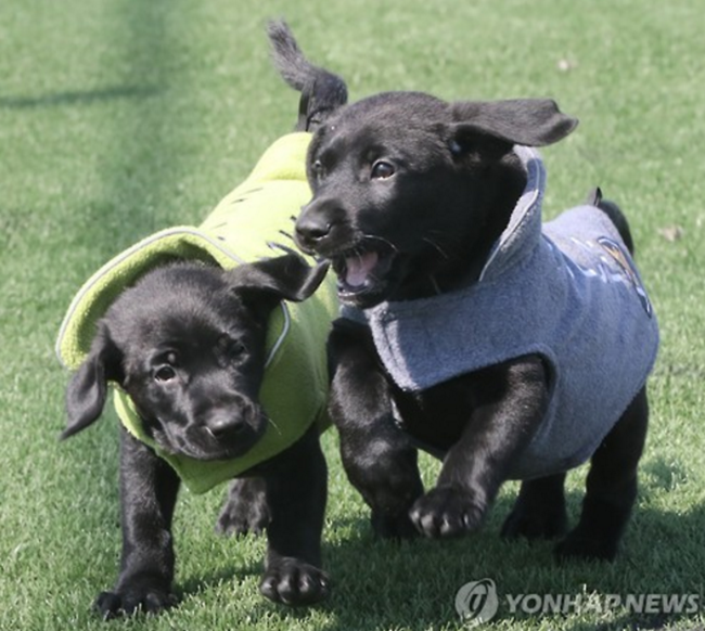 Clone Sniffer Dogs to Be Deployed in S. Korean Police