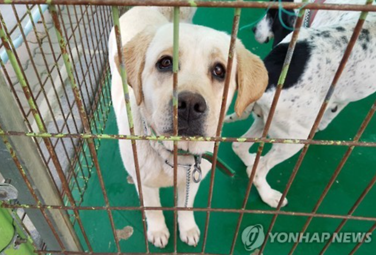 A Stray dog captured in Jeju waits for their family (Image: Yonhap)