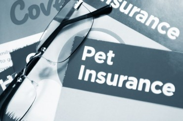 Niche Insurance Products on the Rise