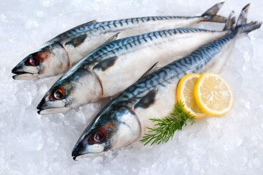 Norwegian Mackerel Thrive in Korea as Local Fish Stocks Dwindle