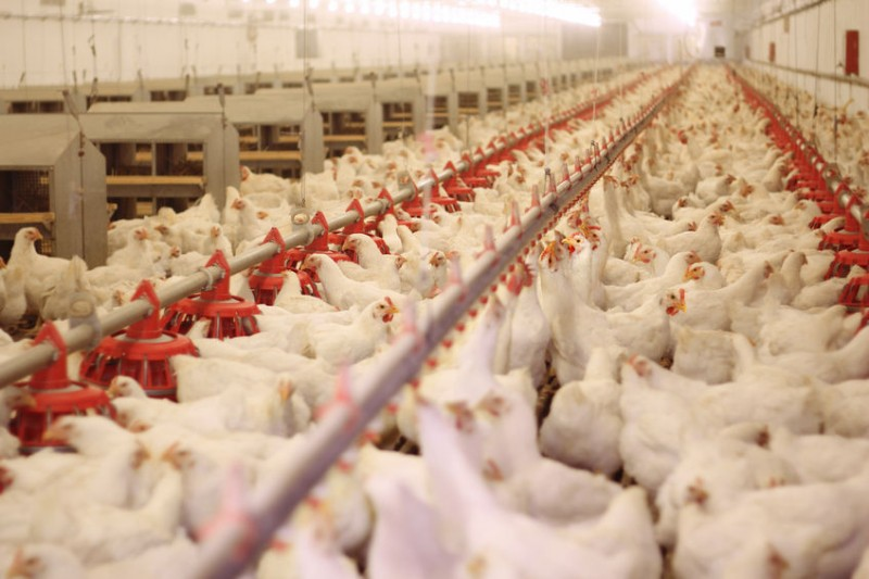 Gov't Says 23 Egg Farms Found to be Contaminated with Pesticides