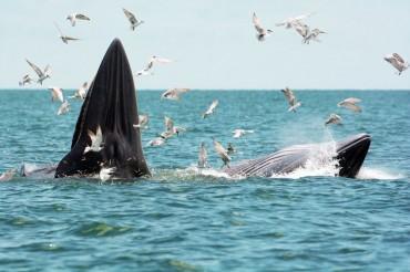 Jeju Museum to Make Massive Specimen of Whale