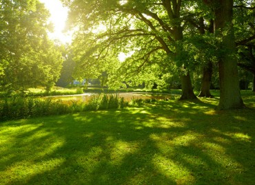 Lack of Green Space Linked to Depression and Suicide