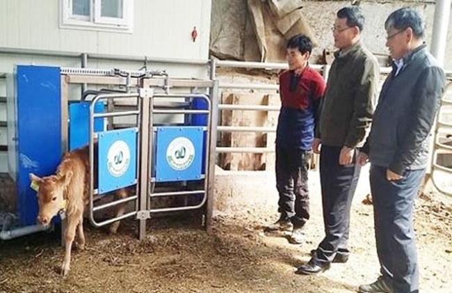 As the deployment of automated calf feeders is likely to boost incomes for farmers by lowering the cost of raising calves, demand is expected to grow. (Image: Yonhap)