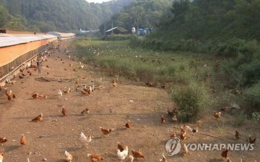An animal welfare-certified farm in Danyang County, North Chungcheong Province. (image by Yonhap, not related to this article)