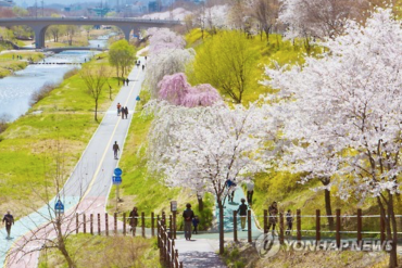 Cherry Blossom Festival Kicks Off at Yangjae Stream
