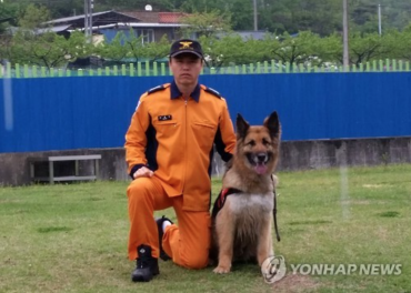 41 Dogs Compete for Title of South Korea's Best Rescue Dog