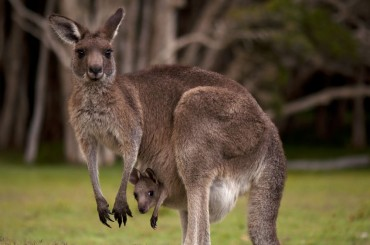 'Kangaroo Families' on the Rise as South Korean Parents Expect to Support Children Until Marriage