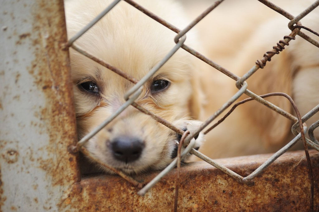 According to Care, the legal guideline designating animals as mere objects is resulting in lax punishment of animal cruelty. (image: KobizMedia/ Korea Bizwire)