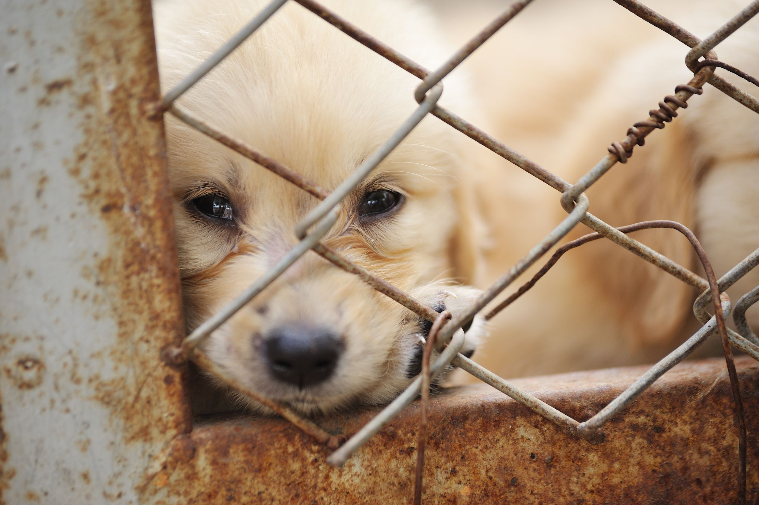 animal rights group invokes the constitution for legal definition of