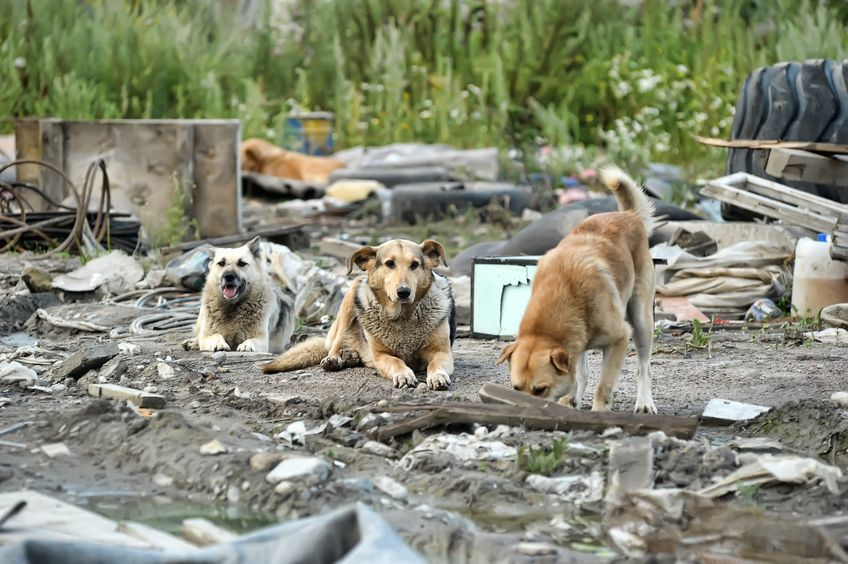 Earlier this month, two farms in Okcheon County in North Chungcheong Province lost a total of 27 chickens to an attack by wild dogs, following another case back in February in the same county where a ten-month-old cow was mauled to death by three wild dogs. (Image: Kobiz Media)