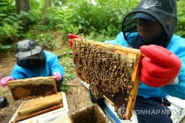 Beesen to export 300 Billion Won of Bee Venom Mask Packs to China