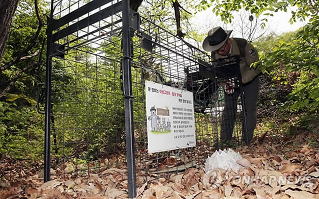 If the redevelopment area is adjacent to mountains, some of the abandoned dogs are feared to become a pack of wild dogs in the wilderness, posing a threat to residents in the local community. (Image: Yonhap)