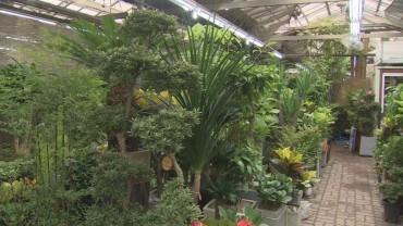 Fine Dust Problems a Boon for Flower Farms