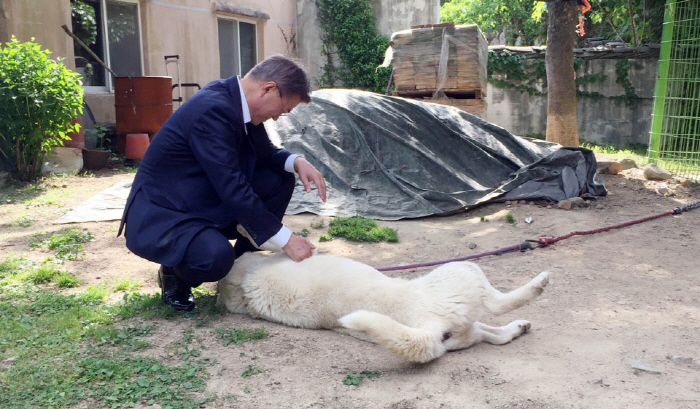 President Moon's Animal Companions Reunited at Blue House