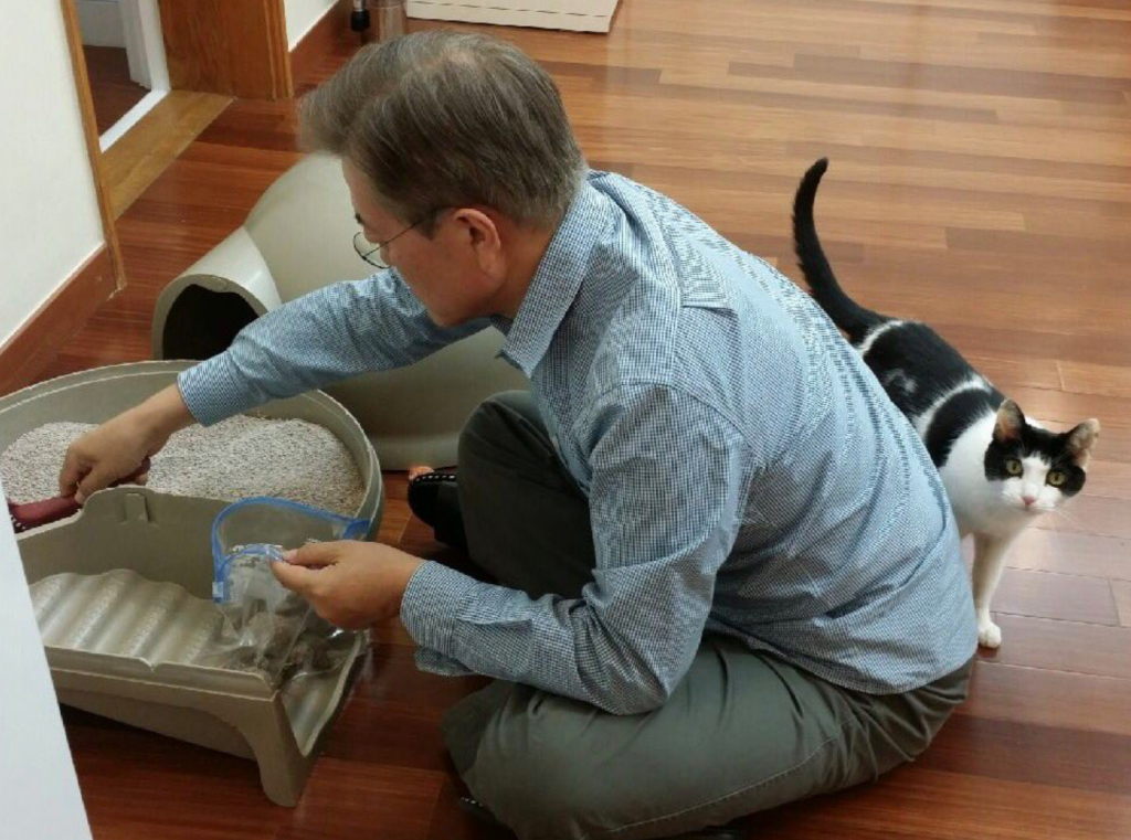 Jjingjing became the first cat on May 14. (image: Twitter)