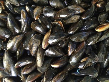 Mussel Adhesive Strong Enough to Endure Heavy Waves Turns Out to Have Hemostatic Effect