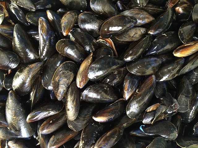 South Korean Researchers Develop Mussel-Inspired Medical Adhesive