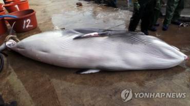 Thousands of Whales Killed in South Korean Waters Every Year