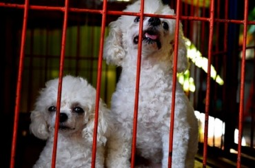 Shakeup in Dog Farming Industry After Abhorrent Breeding Practices Come to Light