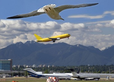 Ministry of Transport to Introduce Bird Strike Reforms