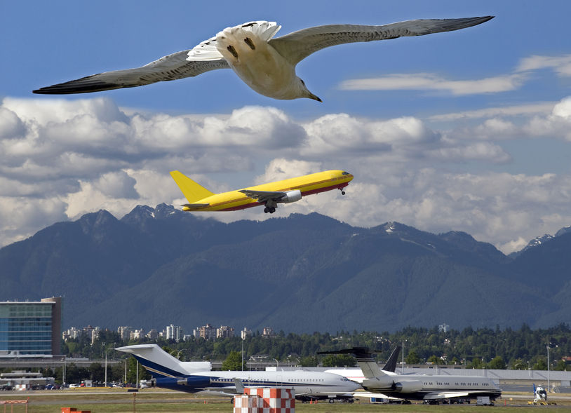 The MOLIT's new move comes on the heels of the 'airport facilities' law which took effect in March, amid a growing number of accidents caused by bird strikes in recent years, which saw facilities with a possible risk prohibited from being built in the vicinity of an airport. (Image: Kobiz Media)