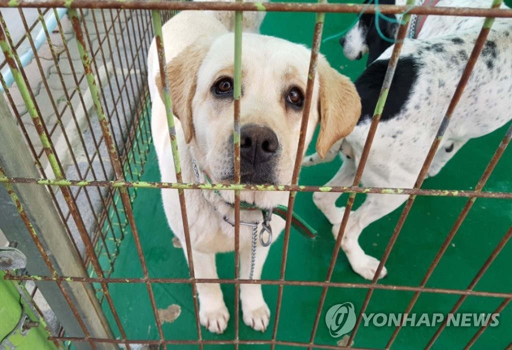 While data collected from local governments under section 45 of the Animal Protection Act shows a minimum of 245 abandoned animals per day, experts believe the number is a lot higher when missing animals that go unreported are also taken into consideration. (Image: Yonhap)