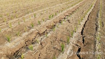 Severe Drought Gripping South Korean Farms