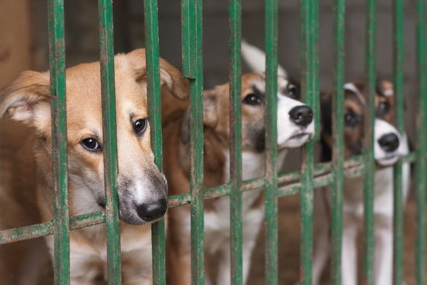 The Ministry of Agriculture, Food and Rural Affairs (MAFRA) announced Sunday that it had passed a revision to the Animal Protection Act, following regulatory measures introduced last year to secure the protection and uphold the wellbeing of animals. (Image: Kobiz Media)