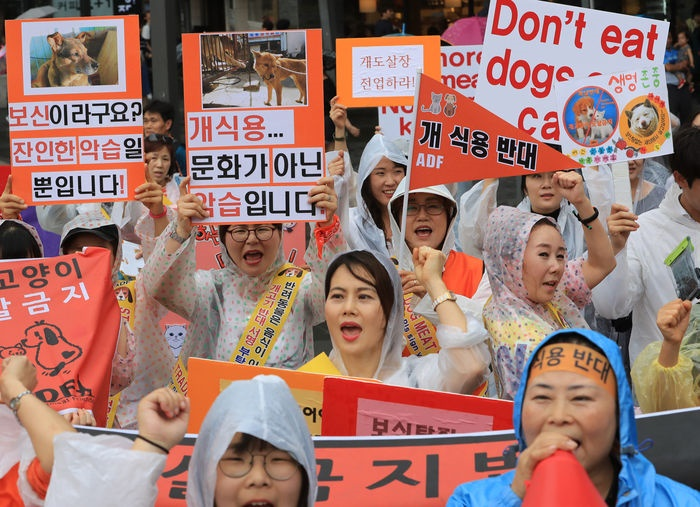 In the run-up to Chobok, a day some South Koreans celebrate by eating dog meat, animal rights activists took to the streets of Seoul over the weekend to protest against the consumption of dog soup during supposedly one of the hottest days of the year in the country, while proponents of the controversial food called for the legalization of dog meat consumption last week. (Image: Yonhap)